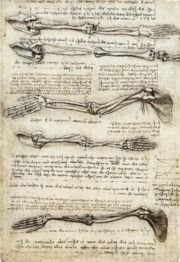 studies_of_the_arm_showing_the_movements_made_by_the_biceps.jpg